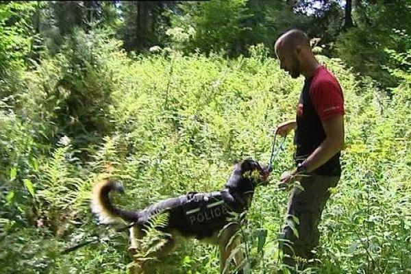 Le flair d'un chien permet parfois de faire avancer des enquêtes difficiles