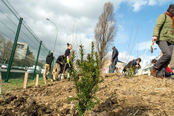 1200 arbres ont été plantés le long du Boulevard Peripherique grâce au projet Plus de nature en ville, laureat du budget participatif 2016.
