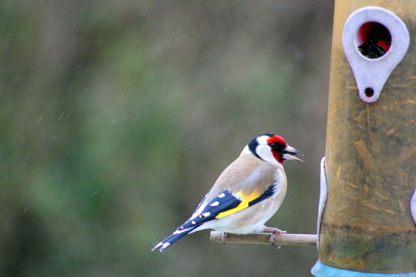 Le Parc Naturel Régional du Livradois Forez organise chaque année des observations d'oiseaux.
