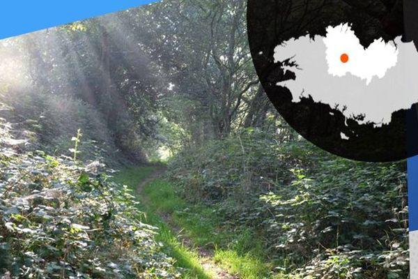 A Trémargat, on compte 700 hectares de surfaces boisées, sur les 1400 hectares de la commune.