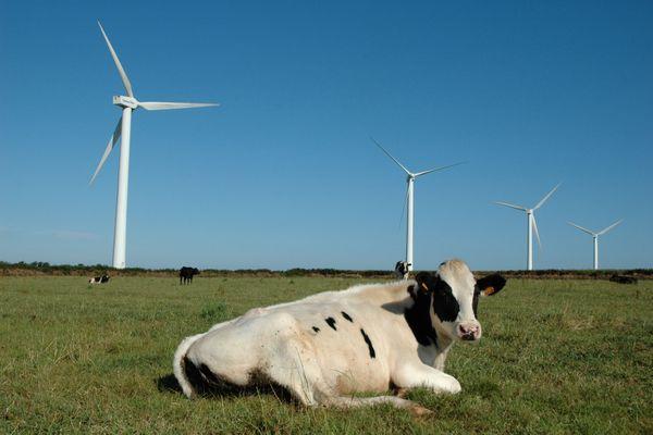 """Une agricultrice de Loire-Atlantique porte plaine contre quatre ministres pour """"nuisances"""" d'un parc éolien"""