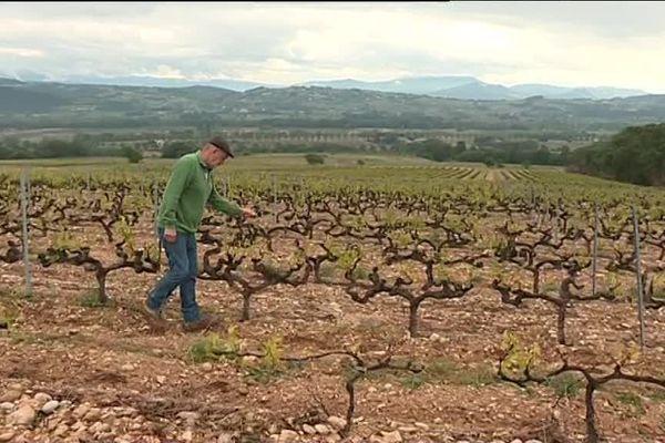 Sur les côteaux de Saint-Maurice-sur-Eygues, la grêle est tombée sur les vignes