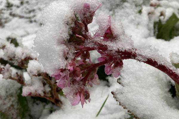 1 à 2 cm sont tombés sur le Centre-Bretagne comme dans ce jardin à Plévin (Côtes d'Armor)