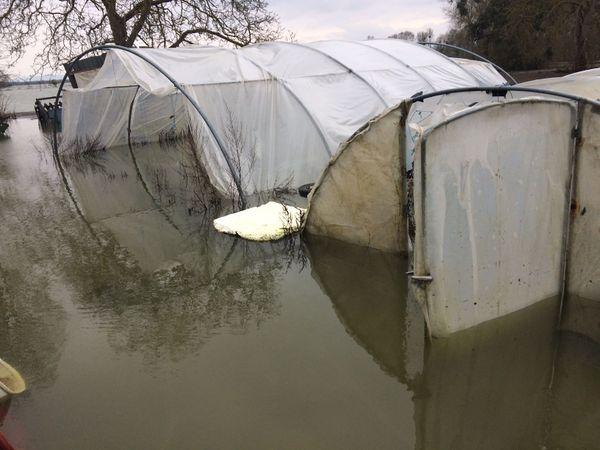 Les serres de Nicolas Martin inondées