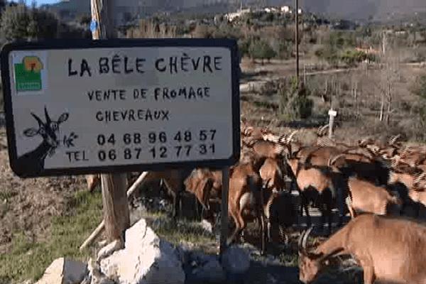 """Arboussols (Pyrénées-Orientales) : """"La belle chèvre"""" va pouvoir finir de s'installer"""