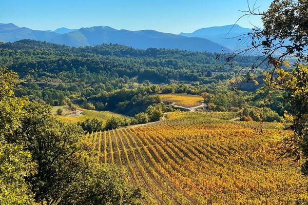 Le domaine viticole des Bergeries de Haute-Provence à Montfort (04)