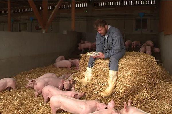 Une fois par semaine, l'artiste Nicolas Koch vient faire la lecture ou jouer de la musique aux cochons du lycée agricole Saint-Lô Thère