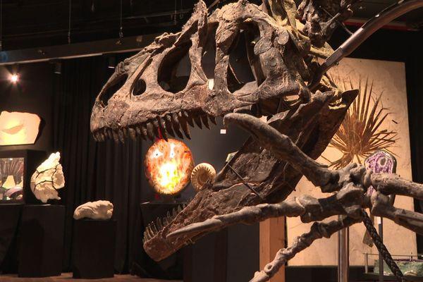 L'allosaure – un dinosaure bipède et carnivore – vivait il y a plus de 150 millions d'années.