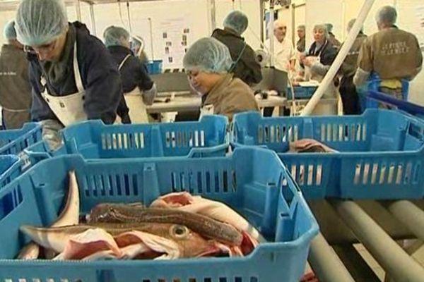 Les adhérents des Paniers de la Mer en plein travail dans les locaux de l'association rochelaise