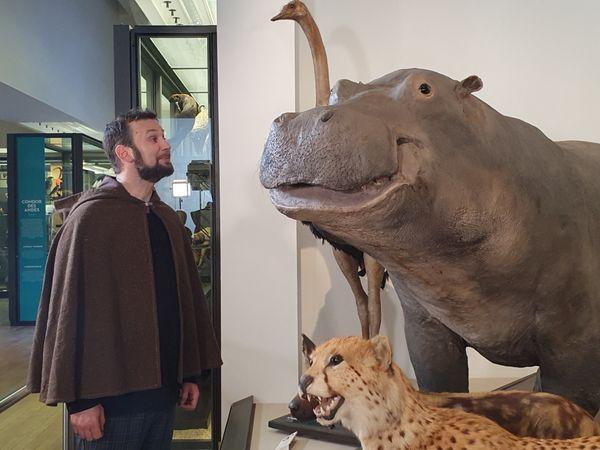 L'histoire du taureau brun de Cooley face aux animaux du Museum.