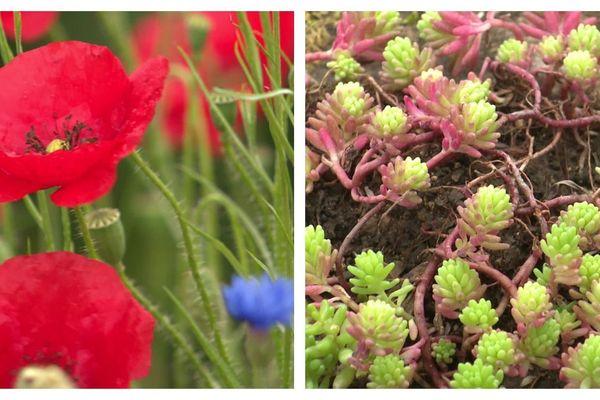 Les jardins de la Saline épanouis et luxuriants