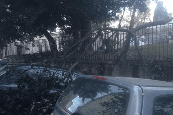 ILLUSTRATION - Dans la nuit de mardi à mercredi le vent a entraîné la chute de branches d'arbres.