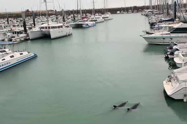 Les deux dauphins pourraient s'être égarés et ne plus trouver la sortie du bassin selon l'observatoire Pelagis.