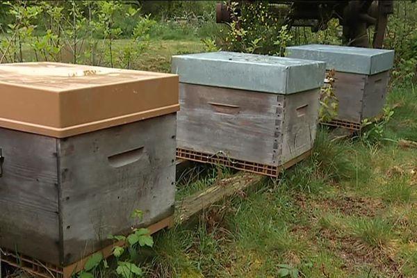 Les abeilles continuent de mourir en nombre dans nos ruchers français