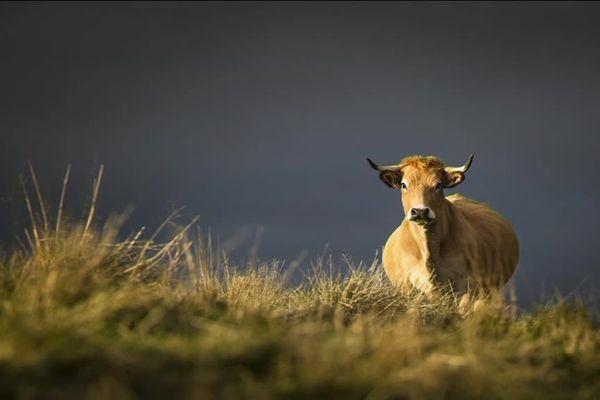 """Photo de la couverture du livre """"Le plancher des vaches"""""""