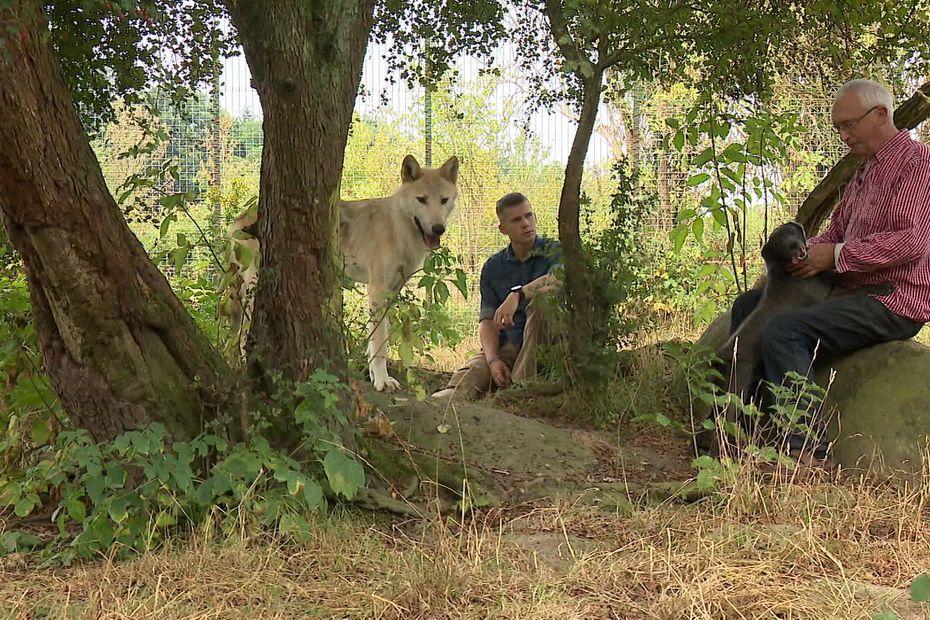 Rencontres contées avec les loups: quand l'animal devient l'ambassadeur de sa cause !