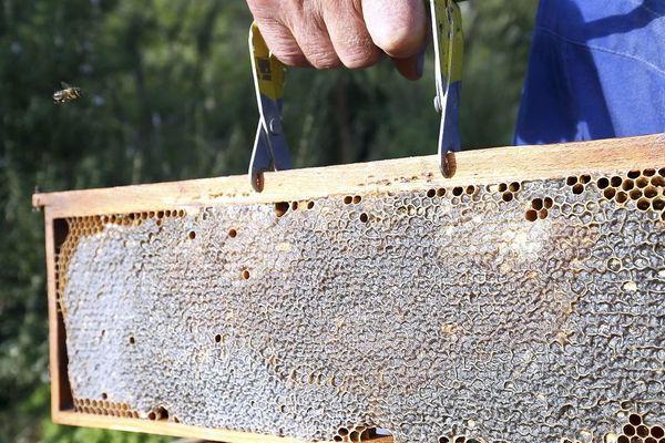 Grâce à la chaleur, les abeilles s'activent et les ruches se remplissent