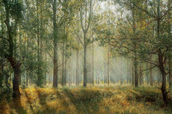 Une forêt sous des rayons de soleil.