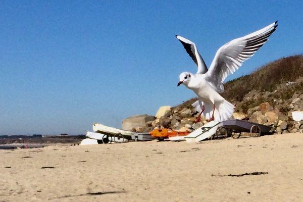 Atterrisage sur une plage du Morbihan