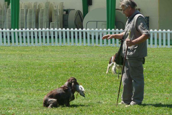 Dressage de chien pour la chasse