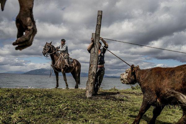 Les cow-boys de Patagonie
