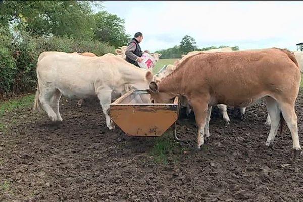 Rémi Guenot est éleveur à Liernais, en Côte-d'Or.