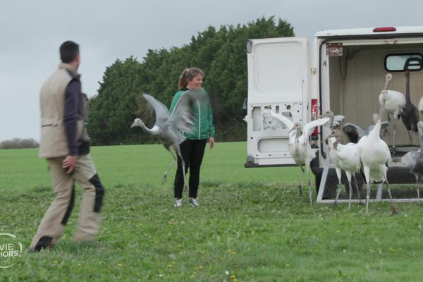 Julie fait voler des grues japonaises avec Romain Tourneux, soigneur animalier et pilote d'ULM