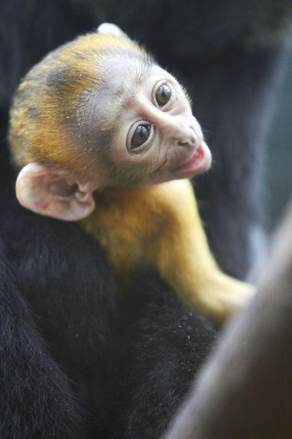 Le singe est né le 17 septembre 2019.