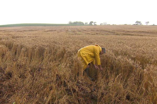 Dans la plaine de la Limagne, dans le Puy-de-Dôme, les agriculteurs scrutent la météo.