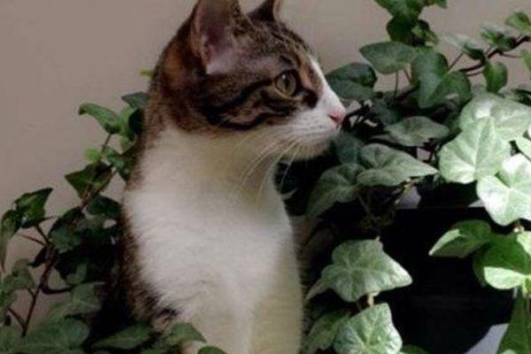 Rosa, chatte d'à peine trois ans, a disparu après avoir été frappée par un voisin