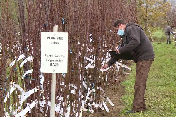 """Le conservatoire végétal régional d'Aquitaine, à Montesquieu en Lot-et-Garonne, vend les plants de sa pépinière en """"click-and-collect""""."""