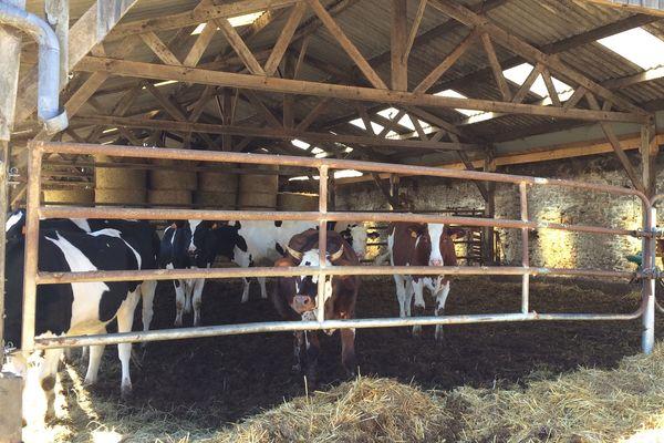 Les prairies sont asséchées, certains éleveurs entament déjà les stocks de fourrage de l'hiver prochain