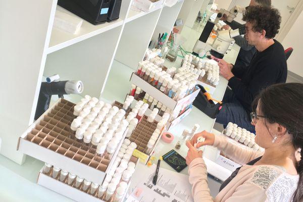 Les équipes de l'Institut Génétique, Reproduction et Développement de Clermont-Ferrand essaient de trouver les causes de myopathies grâce à des mouches.
