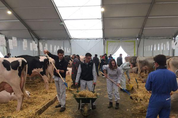 Élèves en bac professionnel agricole et étudiants en BTS repaillent les enclos des bêtes du Sommet de l'élevage, le jeudi 4 octobre 2018 à Cournon-d'Auvergne (Puy-de-Dôme).