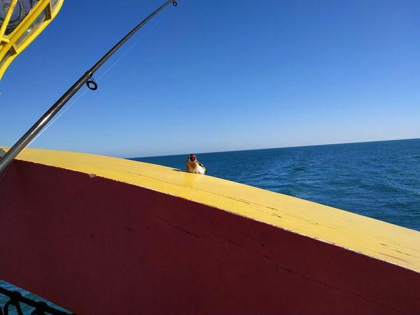 Une visite surprenante en pleine mer dans le Golfe de Gascogne