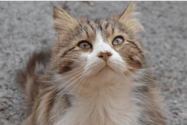 Chevelu, le chat errant de Draguignan, mort sous les coups