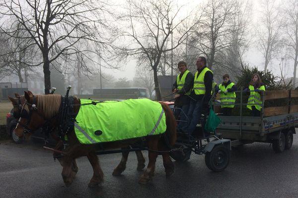 Le cheval de trait sert désormais pour la collecte de sapins