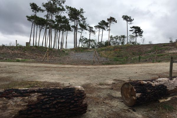 Un an après l'incendie de la forêt du Pignada, à Anglet, la zone tampon, c'est à dire entre la partie brûlée et la partie préservée des flammes, rouvre aux promeneurs.