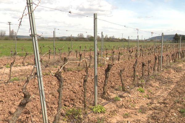 Quinze viticulteurs de l'Aude partent en justice contre France Agrimer