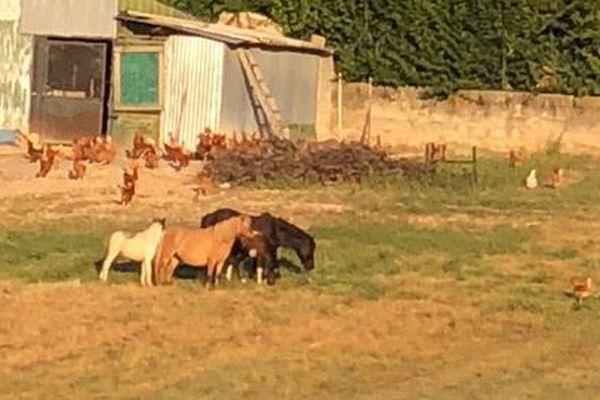 Ces poneys ont été retrouvés sur la route nationale 96 à Fuveau
