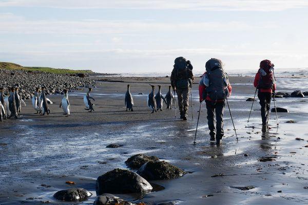 Sur les îles Kerguelen, Emilie a approché la nature au plus près
