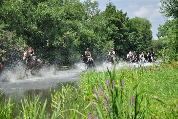Au galop dans la Moselle, l'une des activités proposées par la ferme équestre le Ménil St Michel