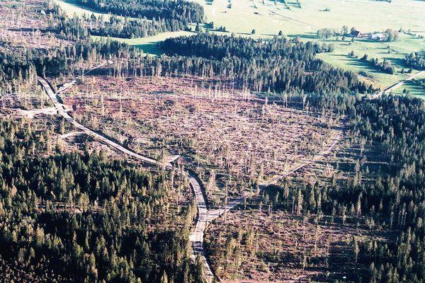 Fin 1999, les tempêtes Lothar et Martin déciment des pans entiers de forêts dans le massif du Jura.