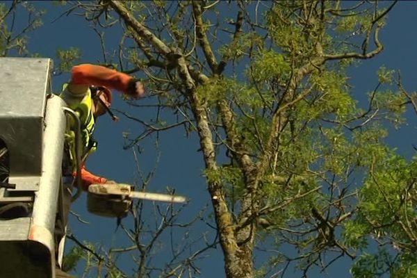 Les arbres seront également sur plus de 5 kilomètres à Rochefort pour laisser passer des convois exceptionnels.