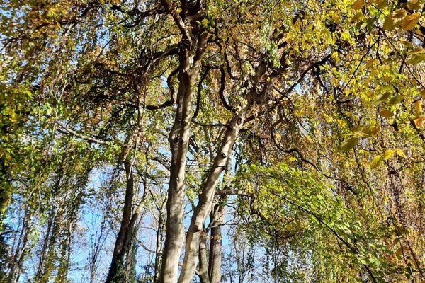 Balades en forêts, sur la trace des animaux, oiseaux, plantes et ... arbres.