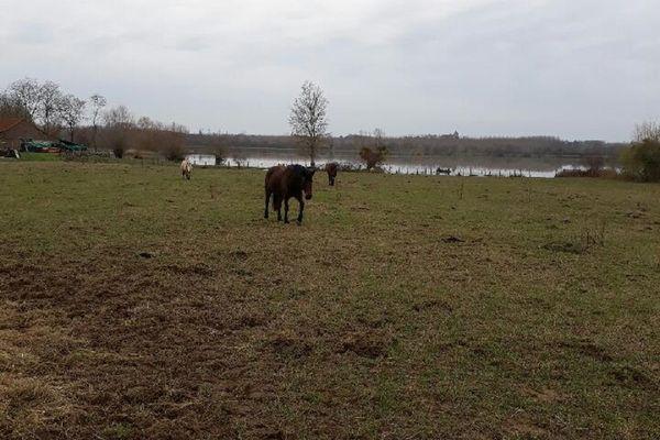 Le terrain se situe en bordure de la Seille, il est zone inondable et les animaux sont dans l'eau dès qu'il pleut beaucoup.