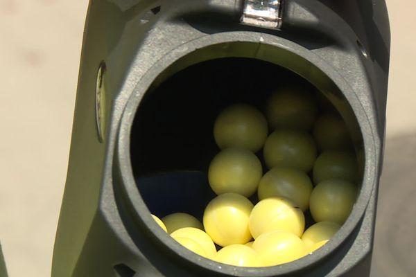 Ces petites boules sont des phéromones lancés dans les cocons à l'aide de paintball.