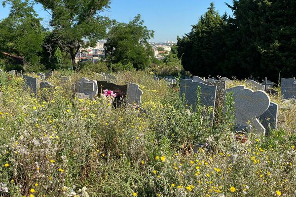 Au Canet, difficile de s'y retrouver parmi les tombes, envahies par les broussailles.
