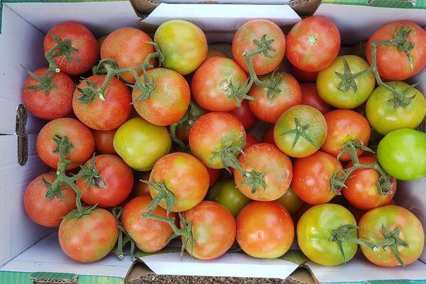 Tomates infectées par le virus ToBRFV, provenance Israël en 2019