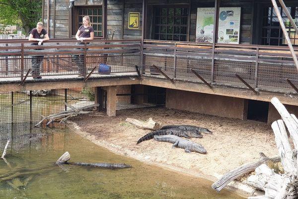 Les visiteurs pourront profiter des 700 animaux et des 30 attractions du Pal comme en temps normal.
